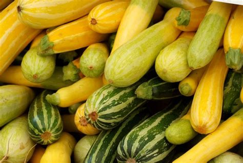 carbohydrates zucchini summer squash and zucchini nutrition facts