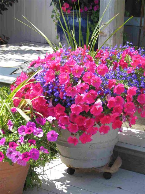 Planters Amazing Container Flower Gardening Container Flowers For Container Gardening
