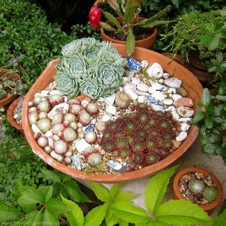 Shallow Planter For Succulents by Diy Upcycled Broken Pot Ideas The Micro Gardener