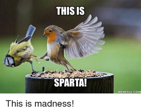 This Is Meme - this is sparta memeful com this is madness sparta meme