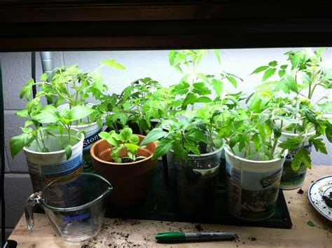 Growing In Hope Will Bike For Change Or Pie Indoor Container Vegetable Garden
