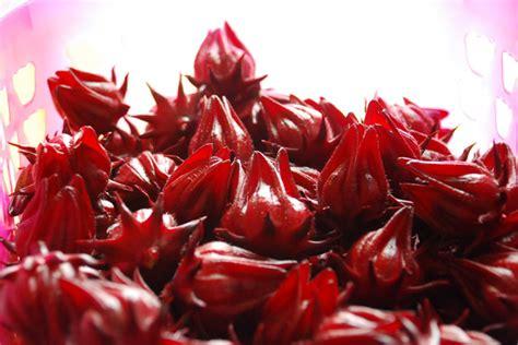 Biji Bunga Hibiscus khasiat roselle magazine