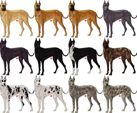 colors of great danes 1000 images about animals on