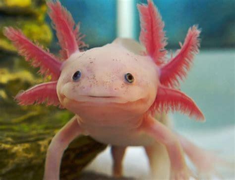 imagenes de animales moluscos la lista roja de moluscos en peligro de extinci 243 n