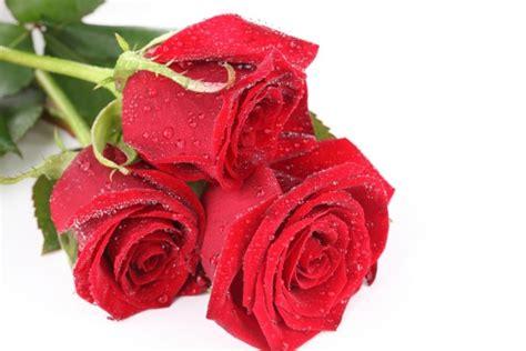 imagenes tres rosas tres rosas rojas 19698