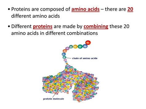 protein expression ppt protein synthesis gene expression notes proteins
