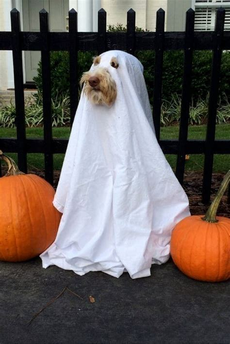 diy puppy costume best 25 pet costumes ideas on costumes for dogs pet