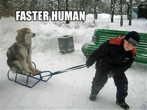 Humans Meme - 25 most funniest sled meme pictures on the internet