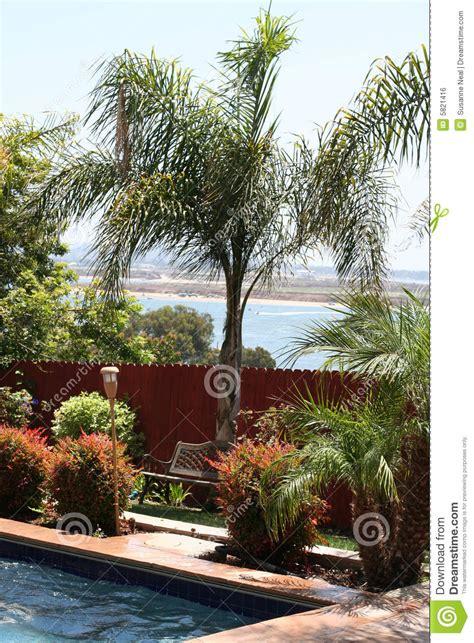 palm tree pool bay backyard royalty  stock image
