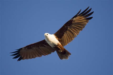 flying on flying bird like success