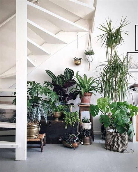 beautiful indoor plants    stairs home