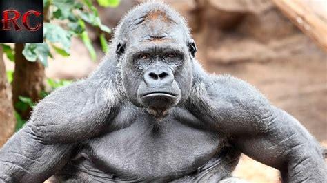 Imagenes De Animales Fuertes | top 10 los animales m 193 s fuertes y poderosos del mundo