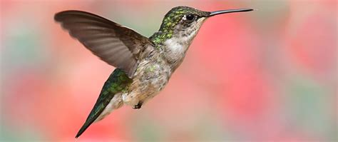 birding activity create a hummingbird feeding station
