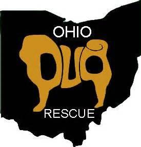 pug rescues in ohio ohio pug rescue www ohiopugrescue pug rescue pug rescue ohio