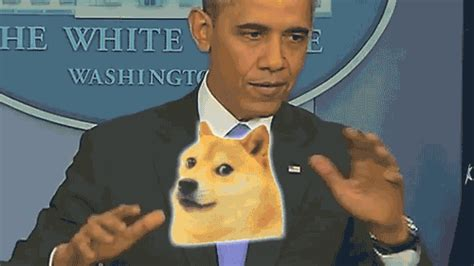 Obama Dog Meme - boop beeop