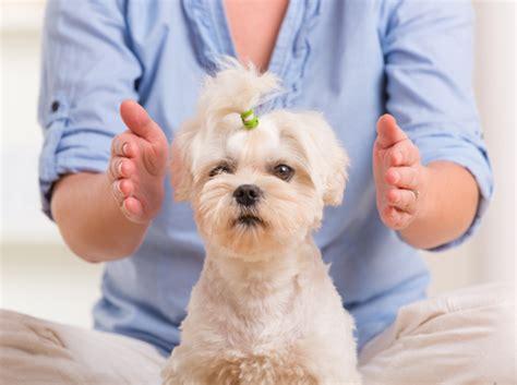 reiki animal healing