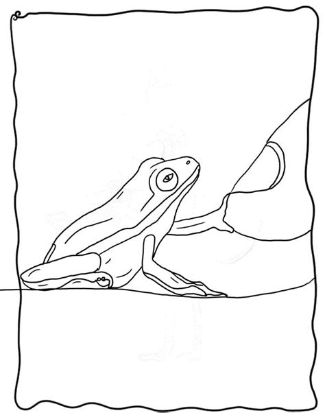 frog legs coloring page pictures of frog legs coloring pages