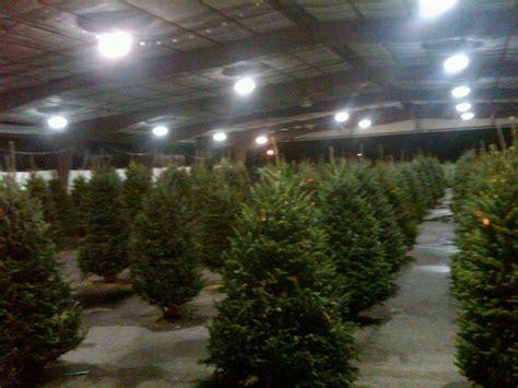christmas tree sales collier county fair