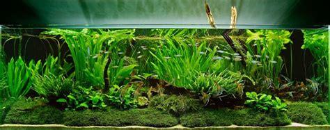 Eco One Aquaspace Aquarium Tanaman Hias 10 jenis tanaman hias aquarium air tawar dan laut terkini 2017