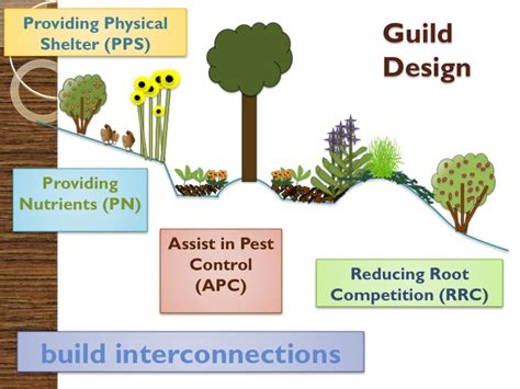 farm layout definition treeyo permaculture definition a permaculture design