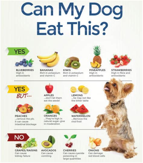 why is my dog not eating what you need to know can my dog eat this