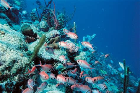 best place to dive 10 great spots for snorkeling and scuba diving in florida