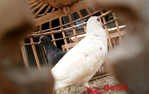 Kasur Bayi Di Pasar Jatinegara berita harian kosmo pasar burung jatinegara tetap bertahan