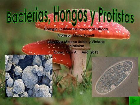 cadena alimenticia hongos y bacterias bacterias protistas hongos