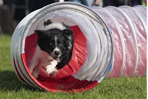 agility tunnel agility the