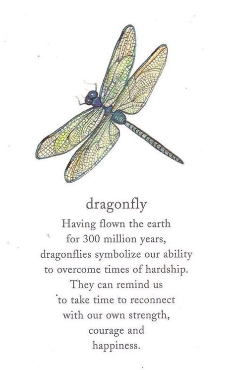 dragonfly quote dragonfly art pinterest ash poem