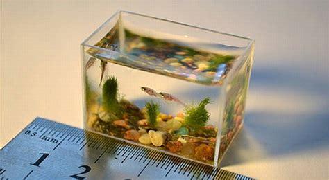 Lu Untuk Akuarium klik refresh akuarium terkecil di dunia hanya bisa menung 2 sendok air