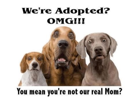 adopted found their forever home colorado saint pet adoption it s a forever home for a dog or cat