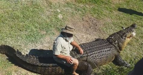 Australia Original 1 Tx Tshirtkaosraglananak Oceanseven g1 australiano d 225 comida na boca e at 233 senta nas costas de crocodilo enorme not 237 cias em
