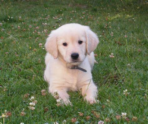imagenes animales perros coleccion de fotos de perros muy buenas taringa