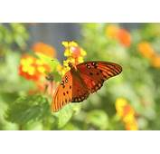 Butterfly Plants For Zone Nine In Full Sun  Home Guides