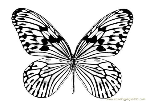 beautiful coloring pages of butterflies beautiful butterfly coloring pages