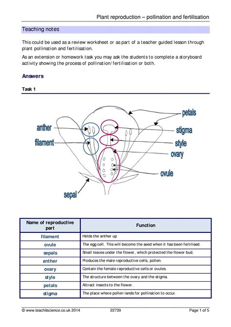 plant reproduction worksheet plant reproduction pollination and fertilisation plants