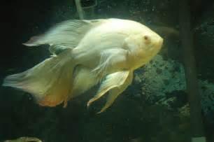 Oscar   Fish Ownage