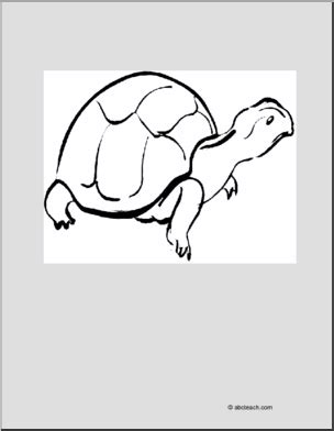 abcteach coloring pages coloring page turtle abcteach