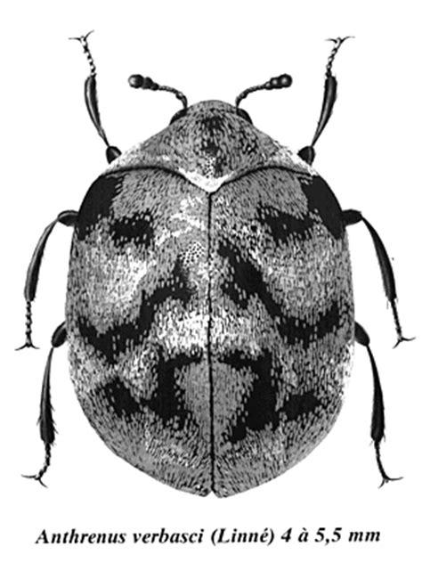 käfer in der wohnung bestimmen k 252 che k 228 fer k 252 che braun k 228 fer k 252 che braun k 228 fer k 252 che