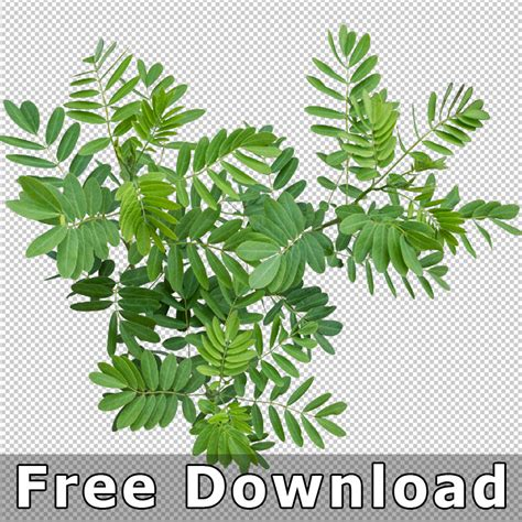 6 best plant layout software free download for windows top view plants 02 2d plant entourage for architecture