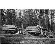 History Of The Lumber Industry In United States  Wikiwand