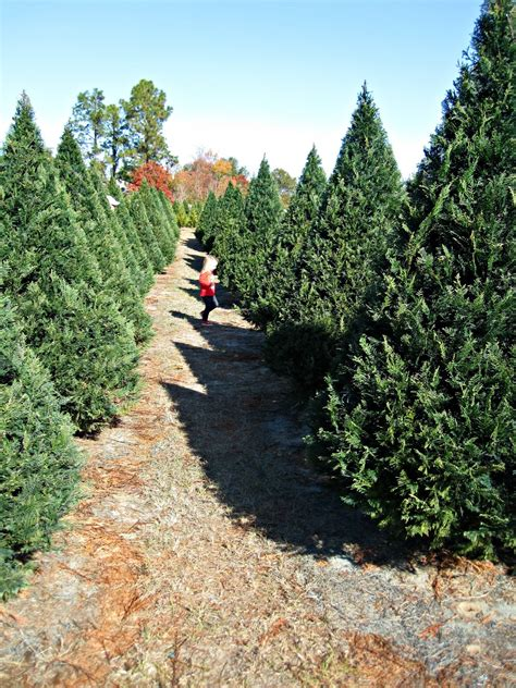trailering with the powells holly jolly christmas tree