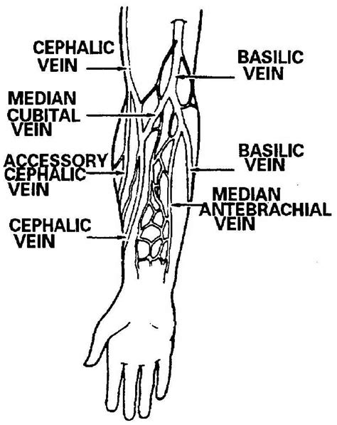 arm veins diagram