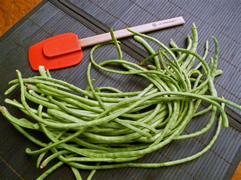 types of green beans with names www imgkid com the
