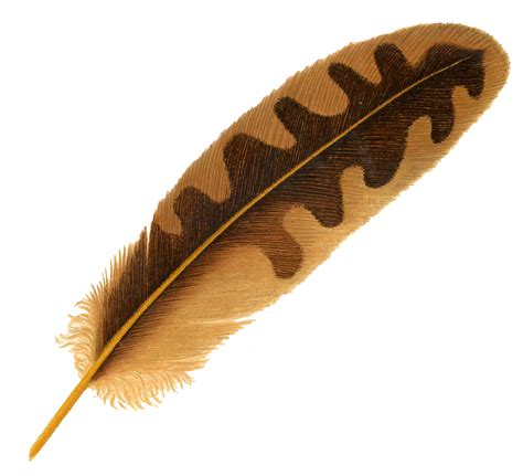 feather with vintage feather image brown the graphics
