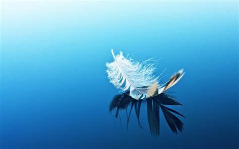 imagenes zen bonitas el estado de 225 nimo del bokeh pluma reflexi 243 n del agua