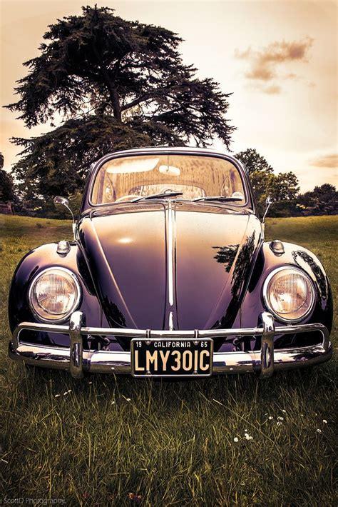 vw bugs ideas  pinterest beetle auto bug car   bug