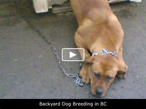 backyard breeder laws animal advocates society of bc videos backyard dog