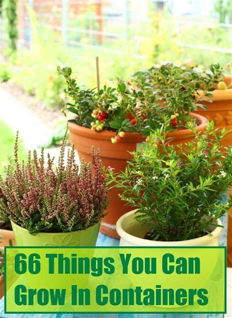 see how you can grow amazing vegetables in raised garden 76 best container gardening ideas images on pinterest